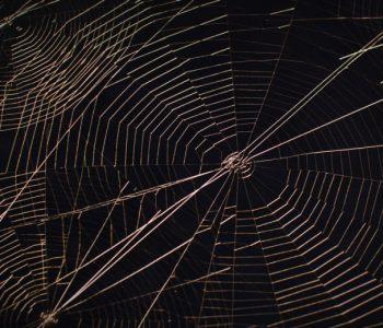 Персональная выставка Андрея Надеждинского «Золотая паутина»